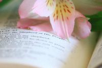 flowers on bible