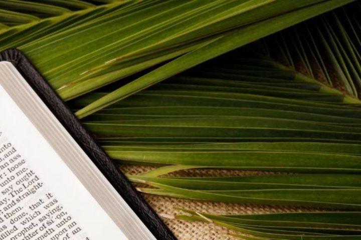 Palm Bible Banner